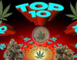 Top 10 Marijuana Quotes