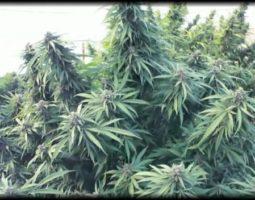 Bronx First Medical Marijuana Dispensary
